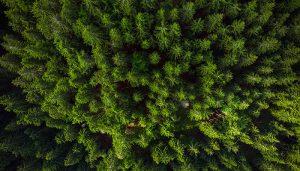 Fotografía Aérea en Naturaleza. Inspección de Bosques con Drones.