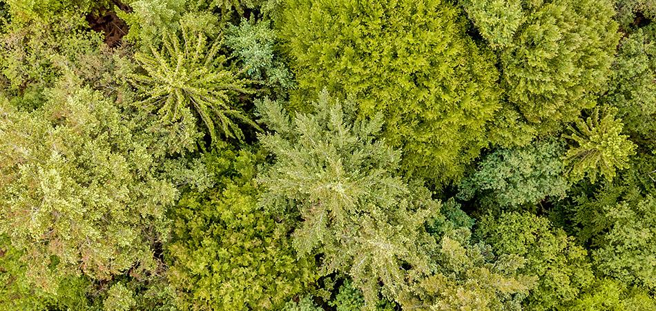 Usos y servicios de Drones en nuestros días en Ecología y Naturaleza